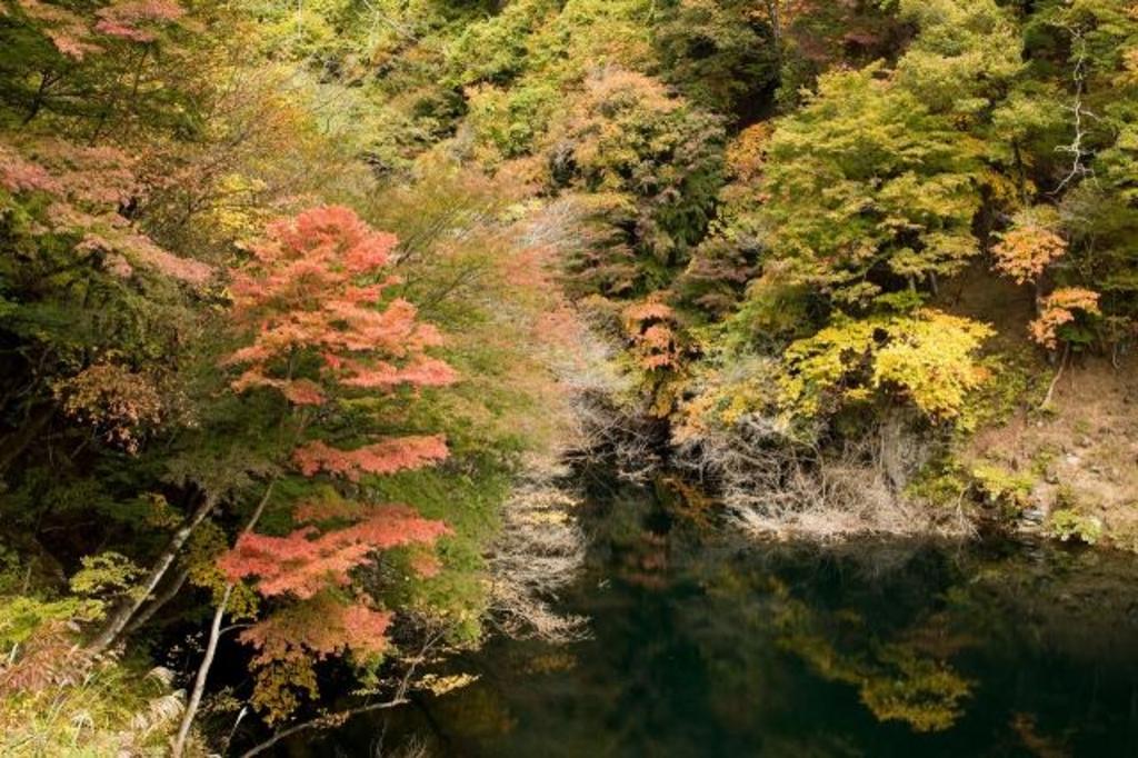 虻川渓谷・日向山ダムの紅葉