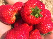 STRAWBERRY GARDEN ROYALの写真1
