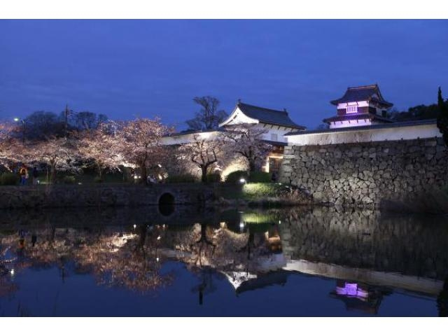 福岡城さくらまつり