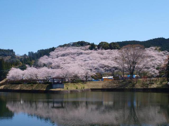上米公園 桜まつり