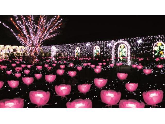 光の花の庭