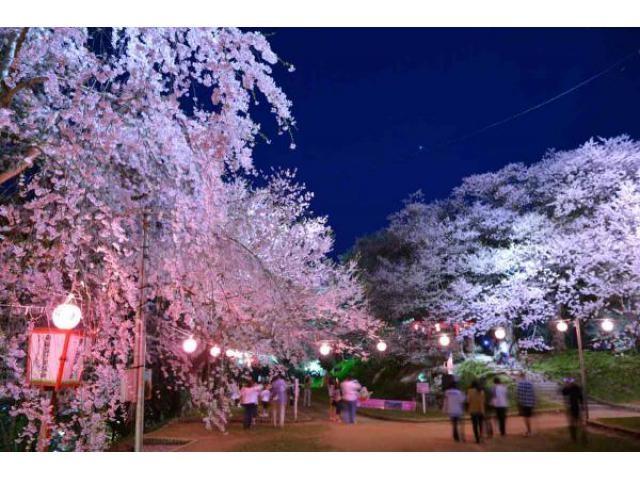 赤湯温泉桜まつり