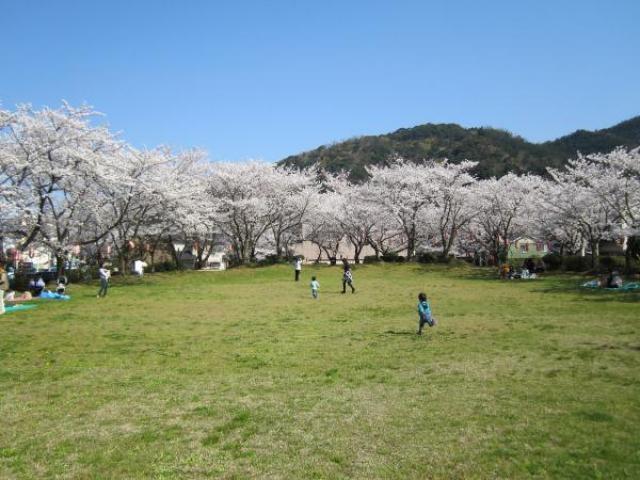 小浜公園 桜まつり