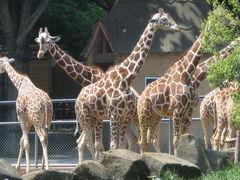 42位.東京都多摩動物公園