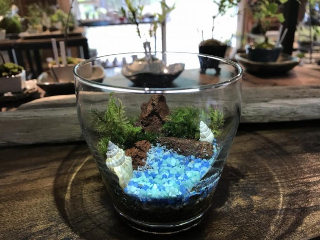 小さな緑のインテリア 苔屋