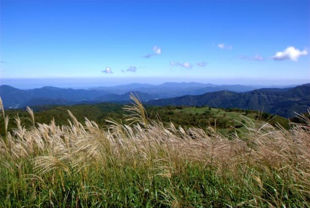 上山高原のススキ草原