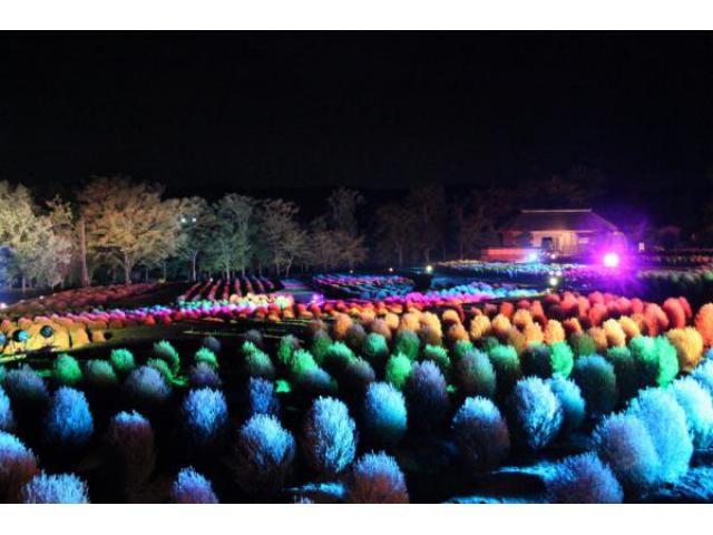 夜間イベント「コキアカリ」