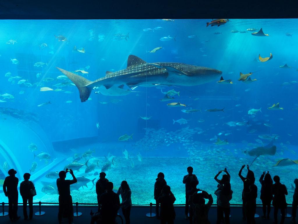 1位.沖縄美ら海水族館