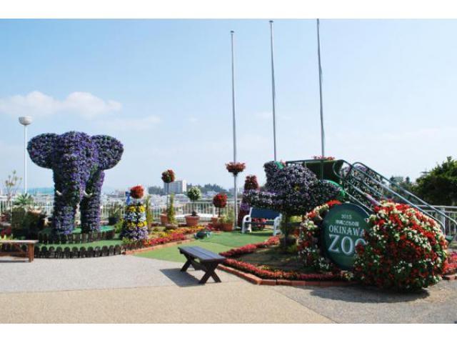 沖縄こどもの国 花まつり