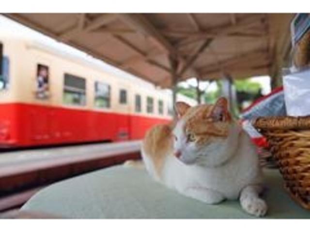『「鉄道」と「猫と鉄道」写真展』