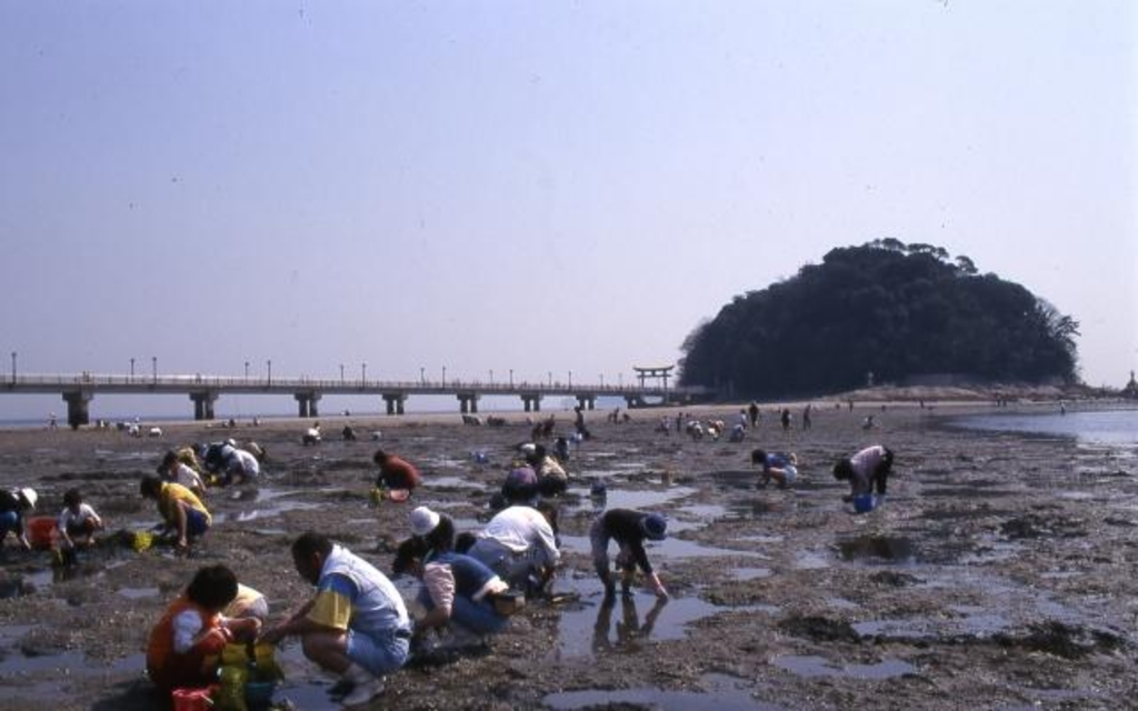 潮干狩(竹島海岸)