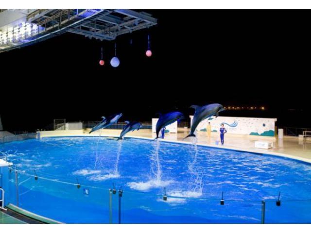 マリンワールド海の中道 GW「夜の水族館」