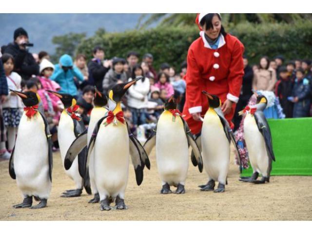 水族館のハッピークリスマス(長崎ペンギン水族館)
