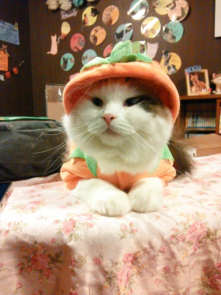 猫カフェcatcafe nyanny 秋葉原店