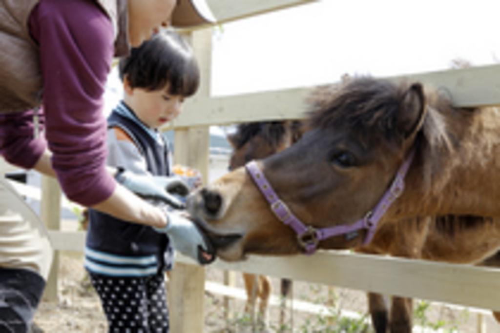 与那国馬ふれあい牧場