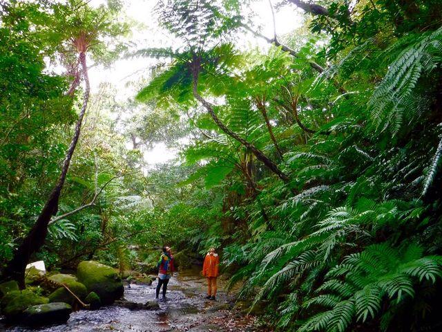 【西表島ジャングルツアーPaaO】予約・アクセス・割引クーポン