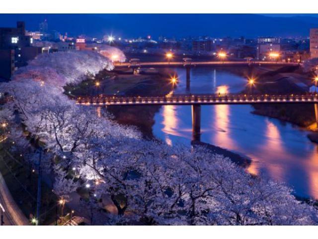 桜のライトアップ・灯の回廊