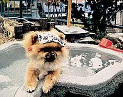 [ペットの犬と一緒に泊まれる宿] きぬ川国際ホテル [旅館]