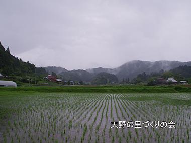 和歌山 ホタル