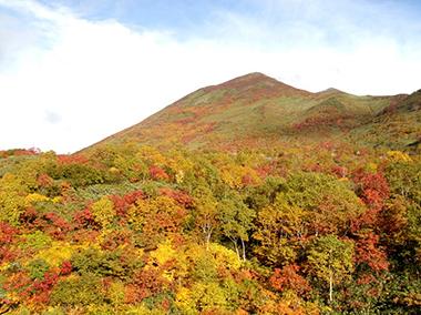 ニセコアンヌプリ(北海道)の紅葉...