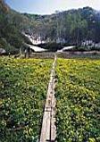 斑尾高原沼の原湿原